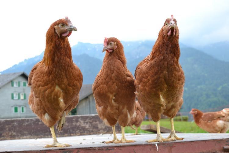 hühner.ei_sibratsgfäll_240_o-750x500