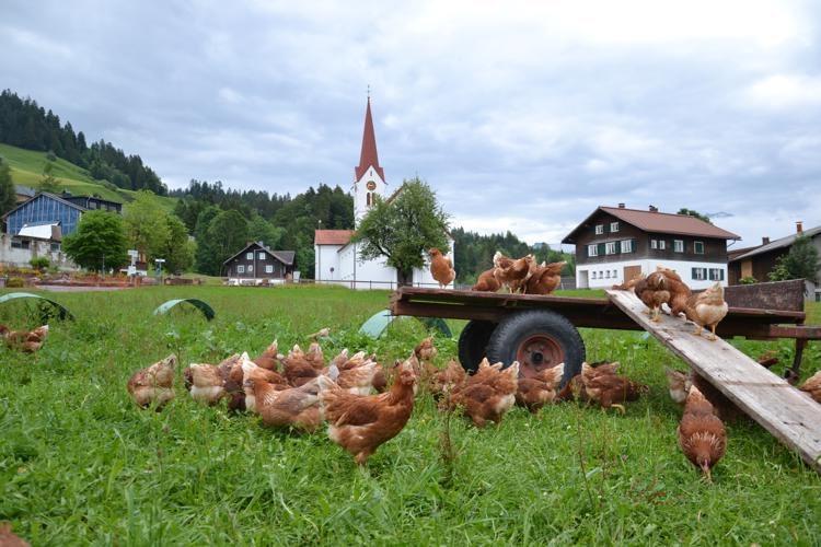 hühner.ei_sibratsgfäll_172_o-750x500